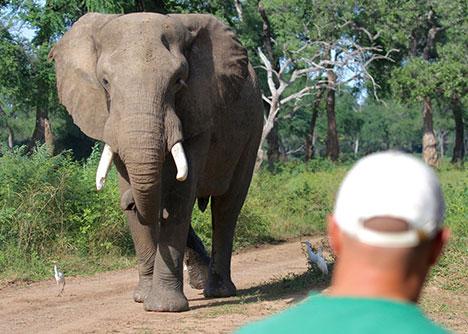Mana elephant